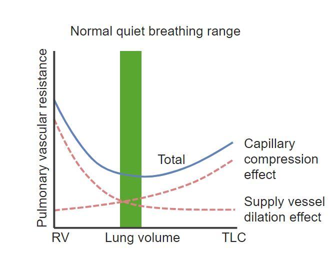 Relationship between lung volume and pulmonary vascular resistance Gas exchange Respiratory regulation