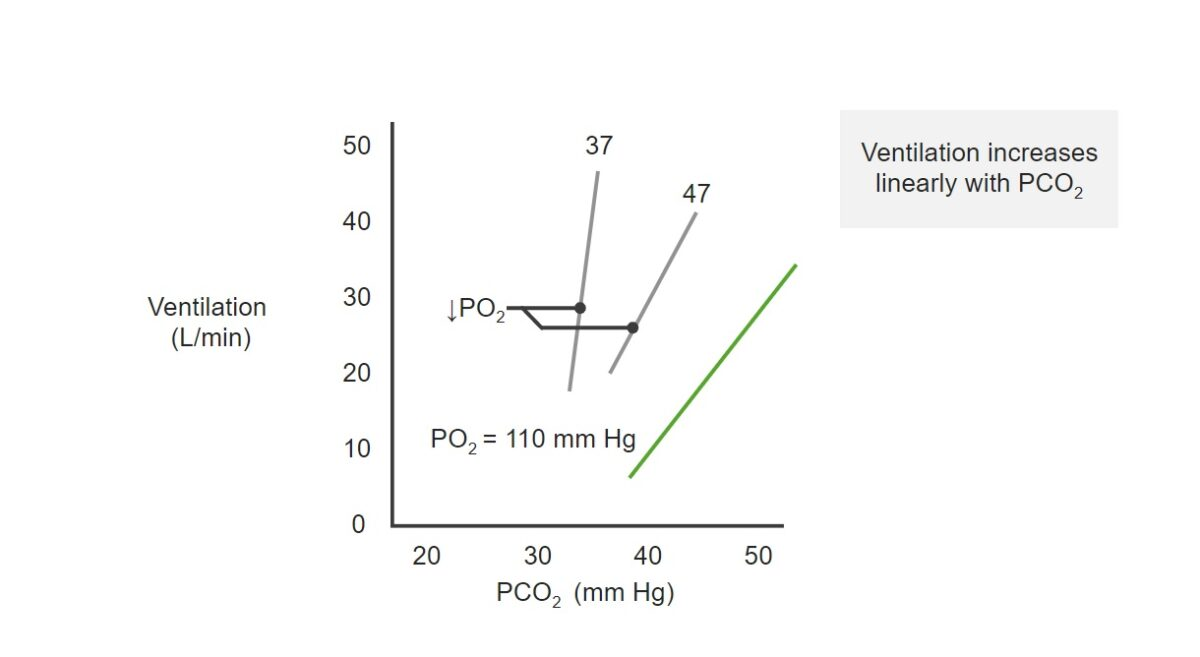 Relationship between ventilation and PO₂, and PCO₂ Respiratory regulation