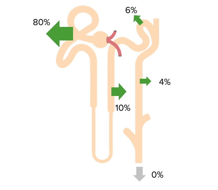 Renal reabsorption of HCO3