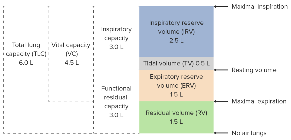 Respiratory physiology_lung volumes and capacities