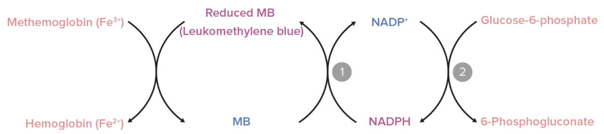 Role of nicotinamide adenine dinucleotide phosphate Methemoglobinemia