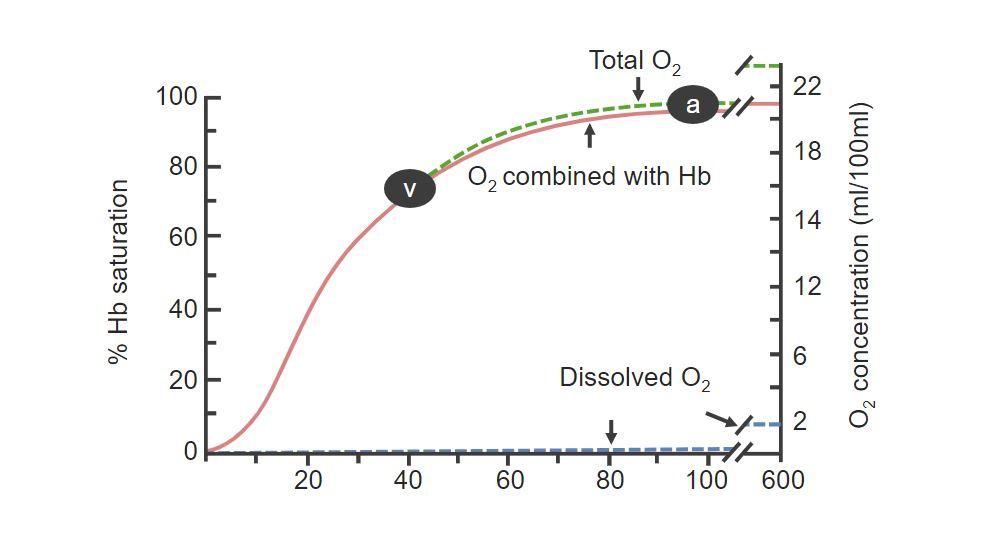 Saturation of Hemoglobin Gas Exchange respiratory regulation