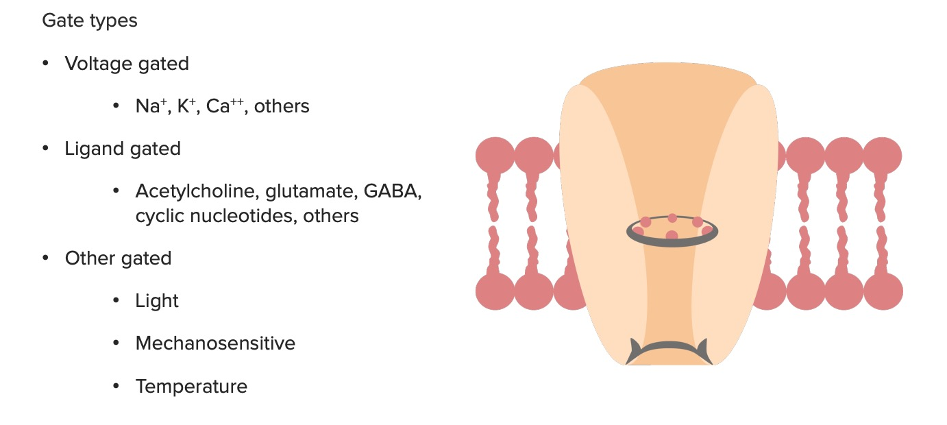 Selective gate types of ion channel proteins