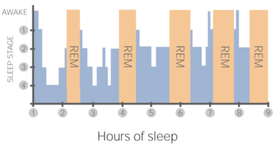 Stages of healthy sleep
