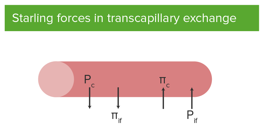 Starling forces and equation in transcapillary exchange