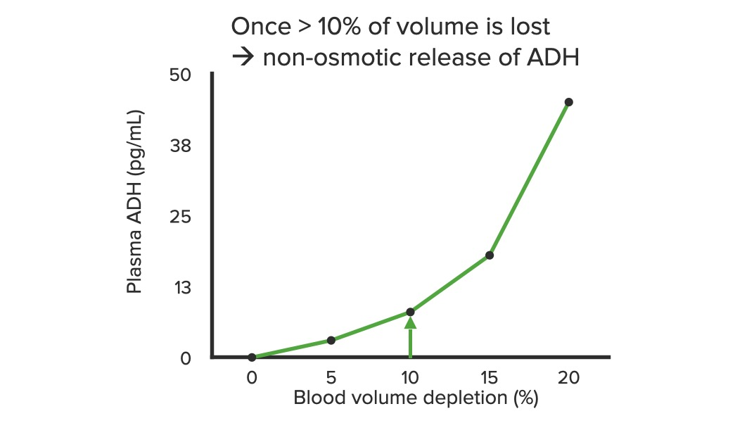 Stimulating ADH release due to decreases in blood volume