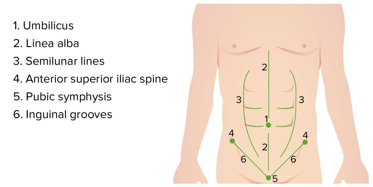 Superficial anatomical landmarks abdomen