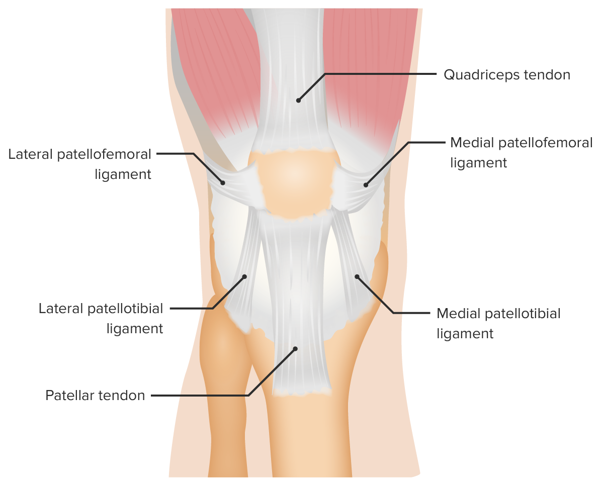 Supporting ligaments of the patellofemoral joint