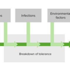 The development of autoimmune diseases