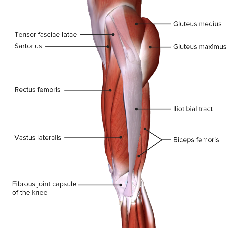 Lateral view of the thigh