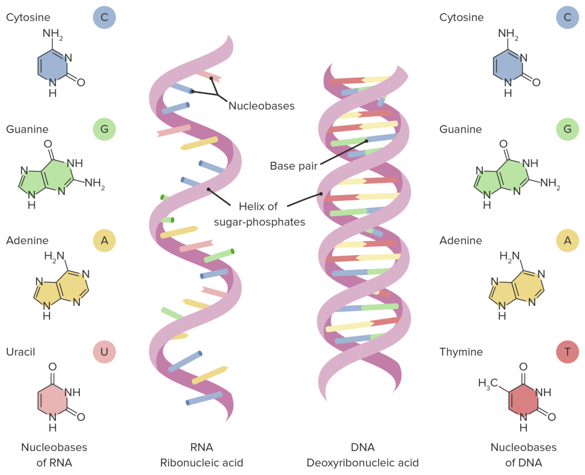 Transcription of Nucleic Acids
