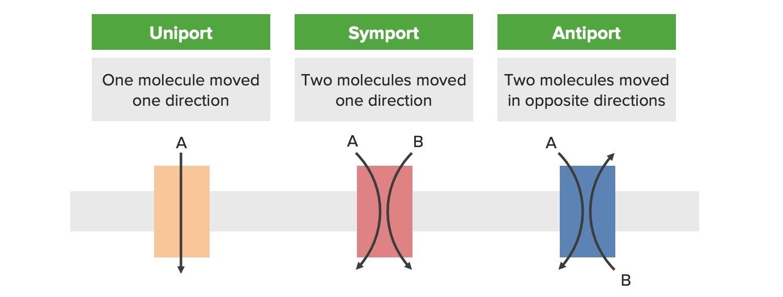 Transport protein types