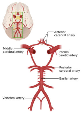 2 sources of blood supply to the brain
