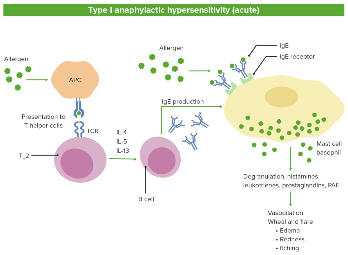 Type I anaphylactic hypersensitivity