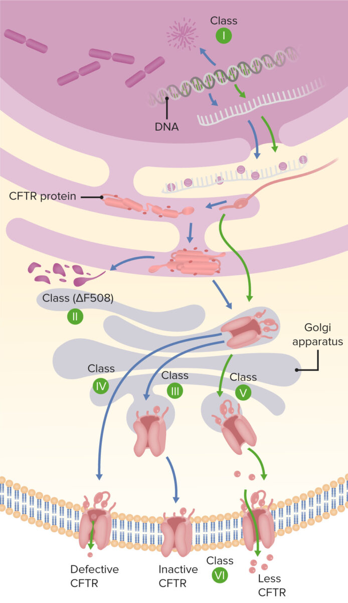 Type of mutation on cystic fibrosis