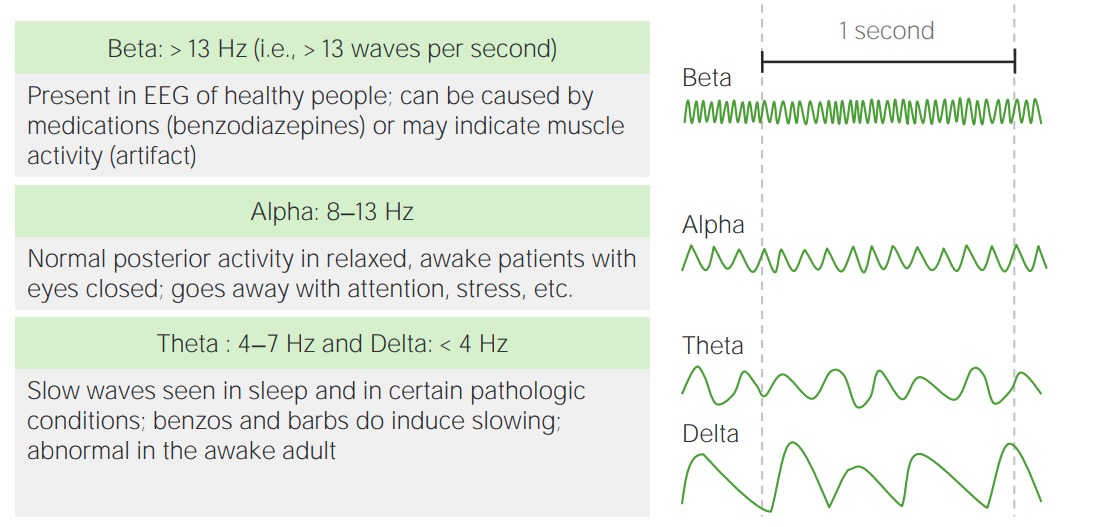 Types of normal electrical activity on an electroencephalogram