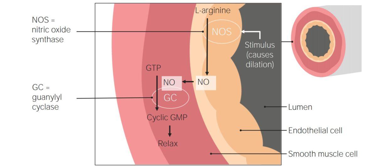 Vasodilatory agents for treatment of pulmonary hypertension