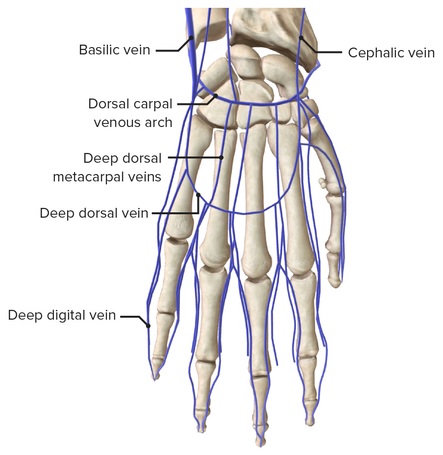 Venous drainage of the hand