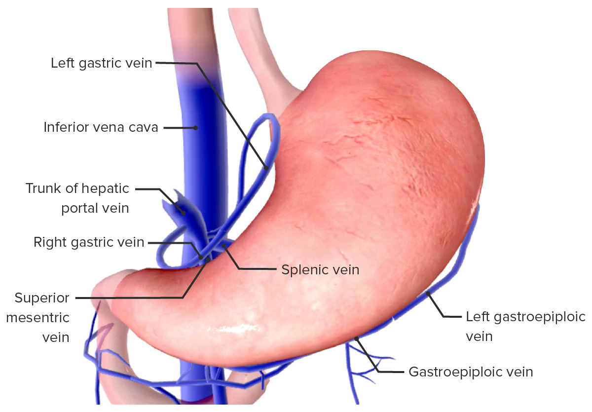 Venous drainage of the stomach