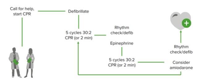 Ventricular fibrillation/pulseless ventricular tachycardia management algorithm