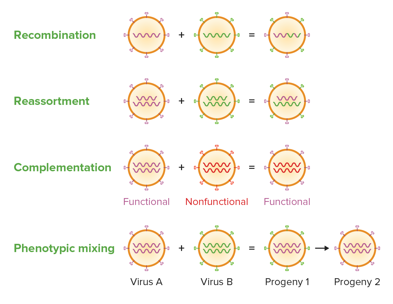 Viruses Genetic Diversification
