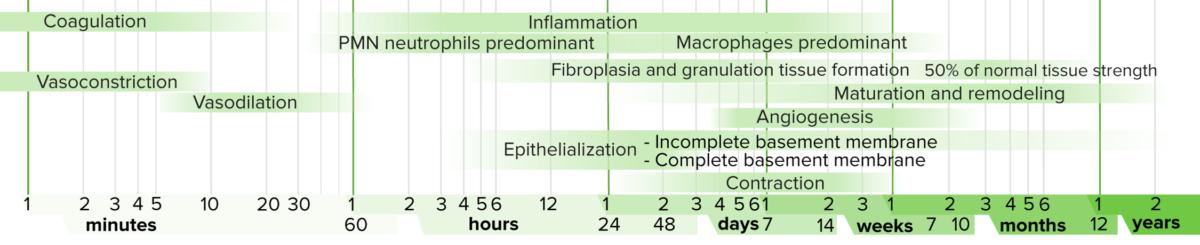 Wound healing timeline