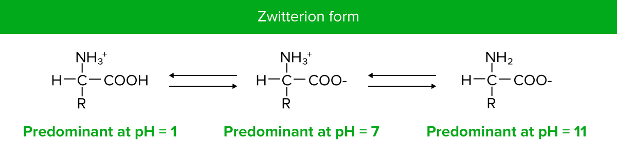 Zwitterion form