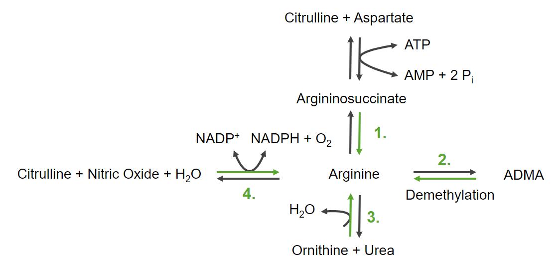 The 4 ways to produce arginine