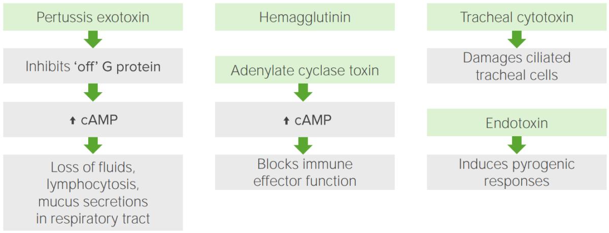 Pathophysiological mechanisms underlying virulence and pathogenic factors