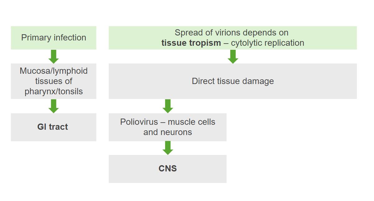 pathogenesis of poliovirus