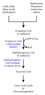 pathophysiology of methylmalonic acidemia
