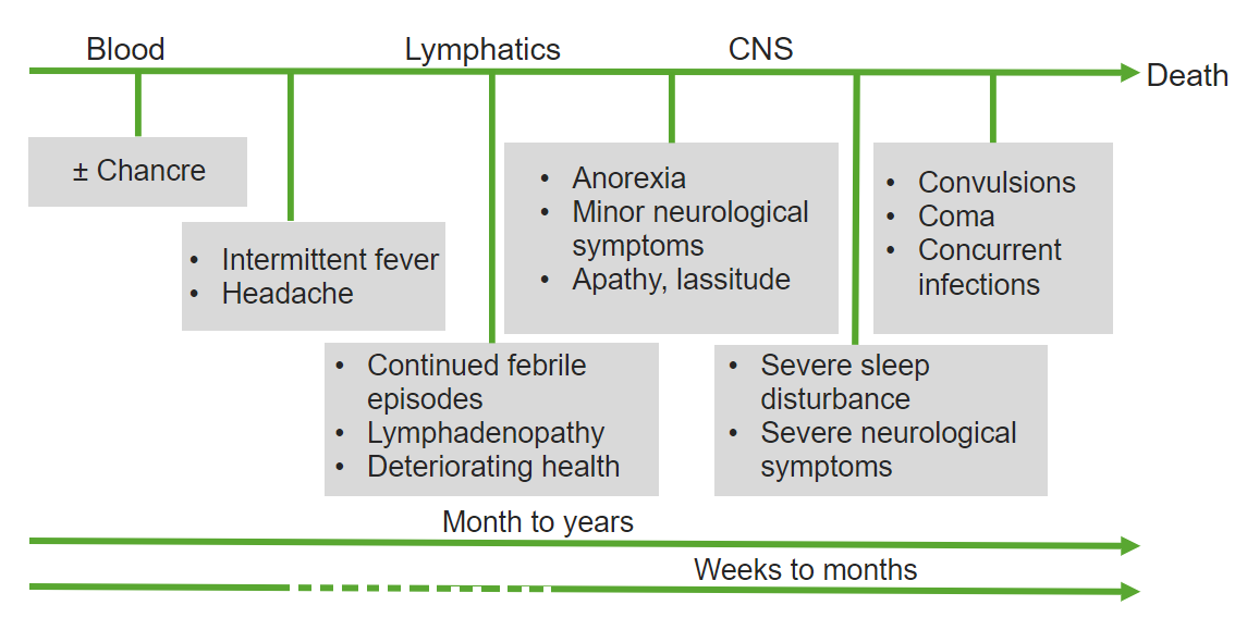 time course of the African trypanosomiasis disease